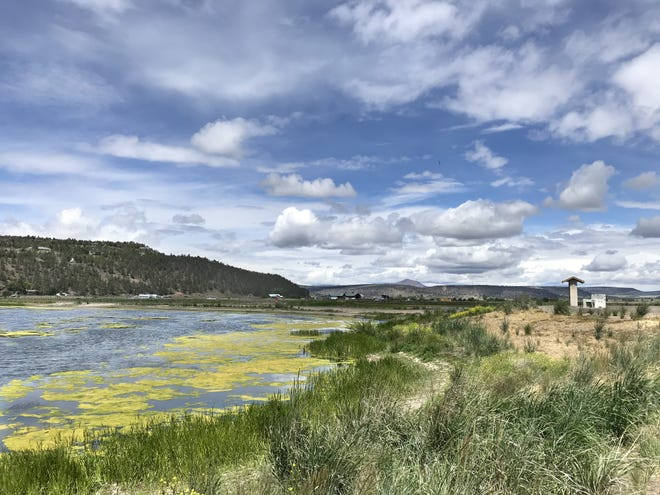 A wetland pond on the Crooked River in Prineville.