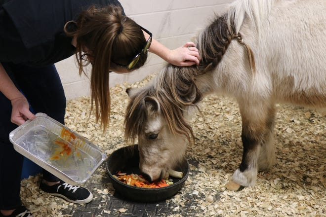 A pony enjoys a Thanksgiving feast thanks to Friends of Cumberland County animals.