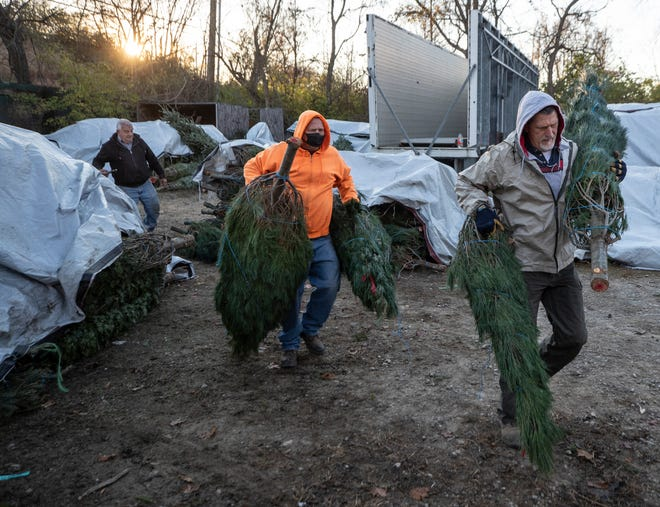 Irvin Book, left, supervises the moving of Christmas trees by Mike Coulter, center, and Scott Morrison. With the death of Tom Thompson, Book is heading up the annual holiday tree sale in downtown Louisville, Kentucky. Nov. 18, 2020