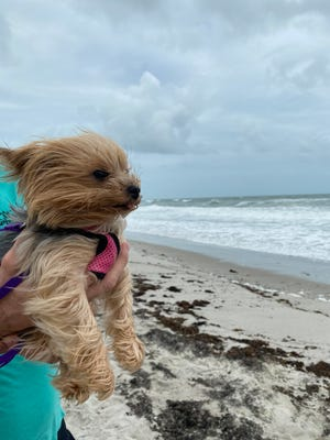 Windy conditions are expected into Friday Nov. 20, 2020, and cooler temperatures on the weekend on the Treasure Coast.