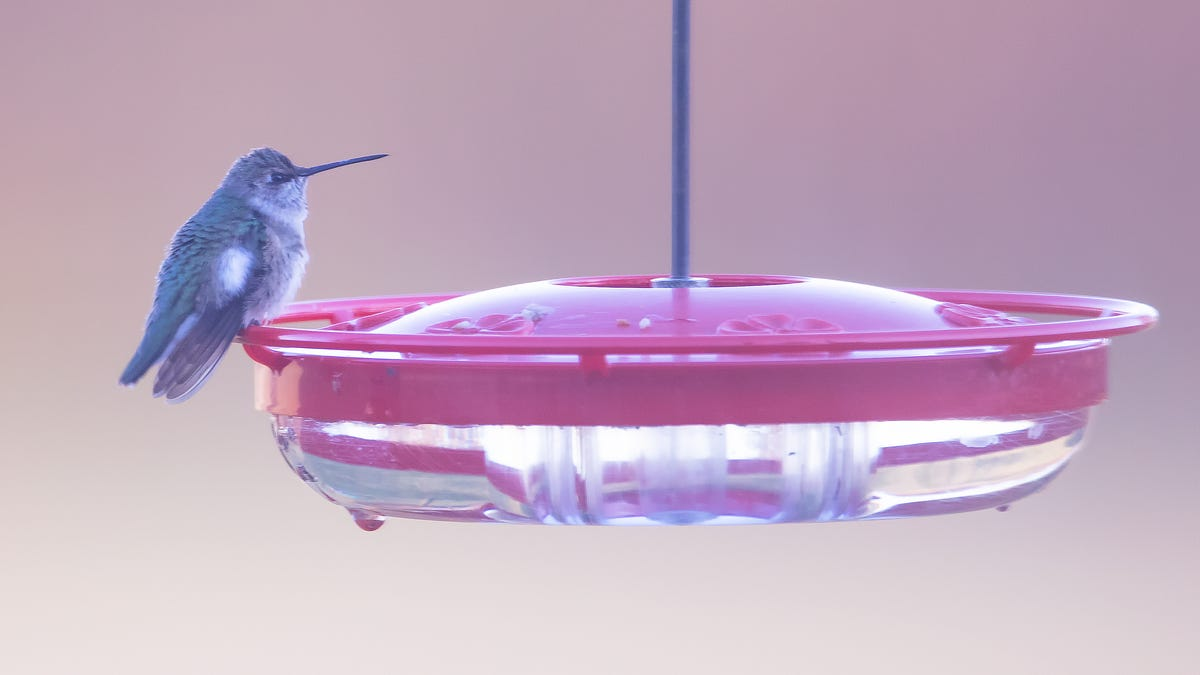 Nature: Sighting of a black-chinned hummingbird a first for Buckeye State