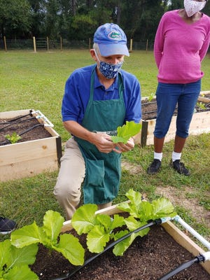 Master Gardener volunteer David Tibbetts works in the Carver Community Garden.