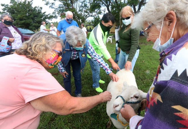 Guests at the Four and Change Farm in Pierson visit with Ester, a Katahdin sheep, as owner Sally Mangra, right, holds her on Friday, Nov. 20, 2020. The visit was part of the annual Volusia County Farm Tour.
