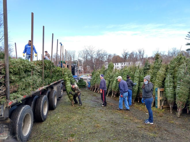 Volunteers unload Christmas trees for Operation Service's Trees for Soldiers at The Gardener's Spot in Leominster in November 2019.