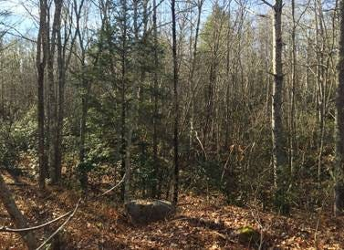 The Department of Environmental Management (DEM) announces the permanent protection of 149.5 acres of forested land in Tiverton for public recreational use, including hunting.