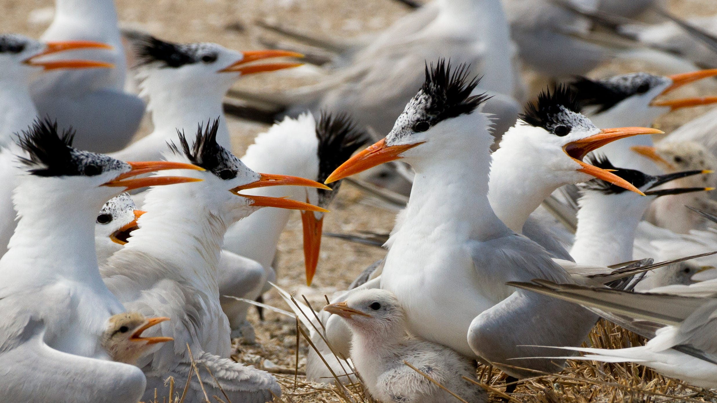 Terns on the beach.