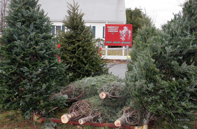 Marshfield Kiwanis will host their annual Christmas tree sale at the Marshfield Fairgrounds starting Nov. 27.
