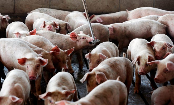This bullish hog inventory report surprised industry analysts, with swine numbers coming in below their expectations.