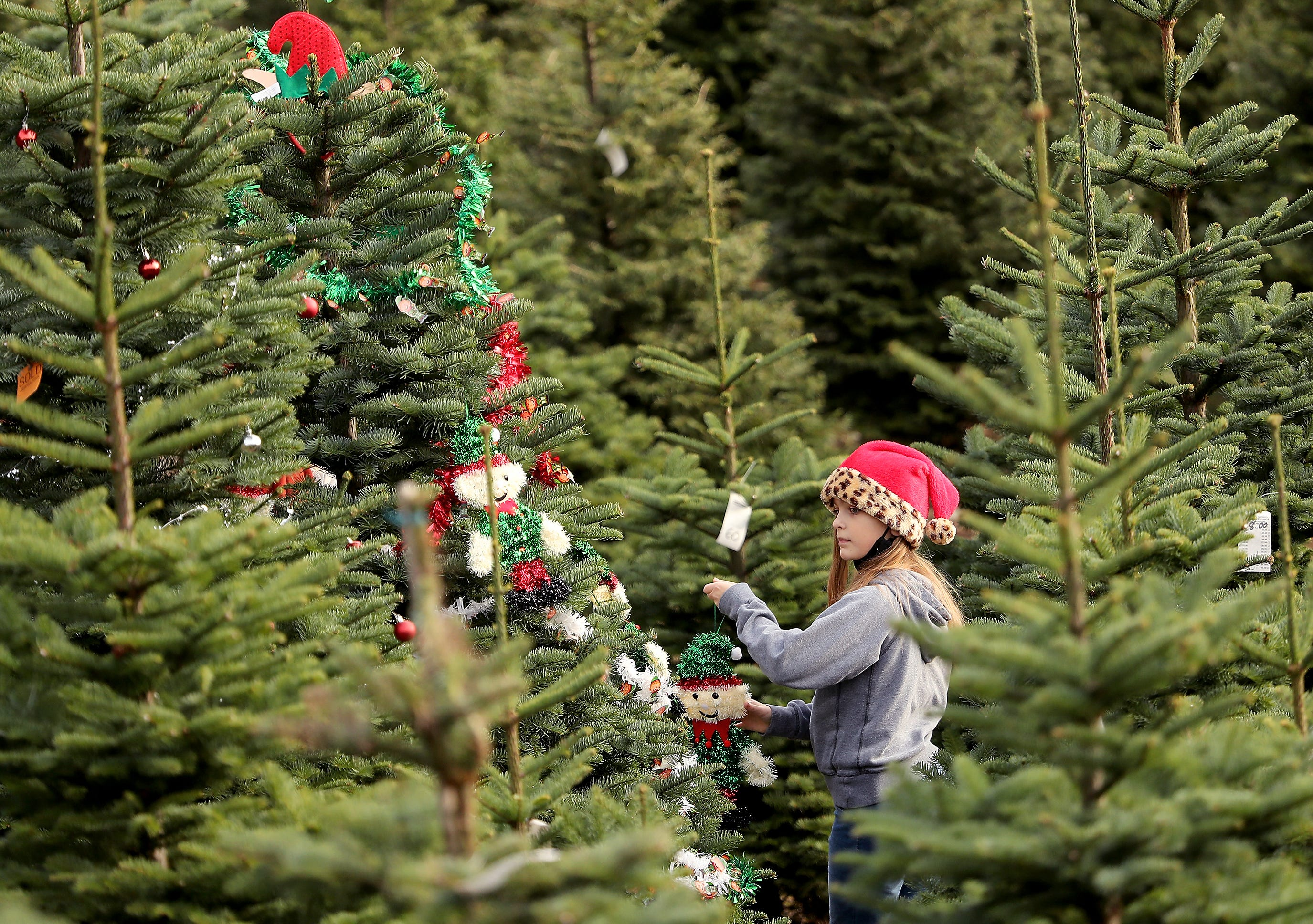 Tree Farms Expected To Be A Big Draw During Covid 19 Holiday Season