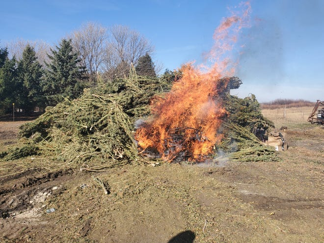 Some of Iowa's first hemp crop is burned after exceeding THC limits