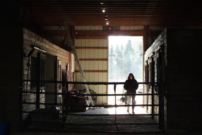 Sebuah lumbung menawarkan perlindungan bagi hewan dan manusia di Suaka Margasatwa Sunrise dekat Ossineke, Mich., Pada hari Jumat, 13 November 2020. Suaka ini menawarkan perlindungan dan sambutan bagi hewan yang telah dilecehkan, diabaikan, atau diusir dari rumah mereka. Ini juga merupakan tempat di mana orang yang melawan kecanduan dapat merasa dihargai dan dibutuhkan, terlepas dari bekas luka mereka.