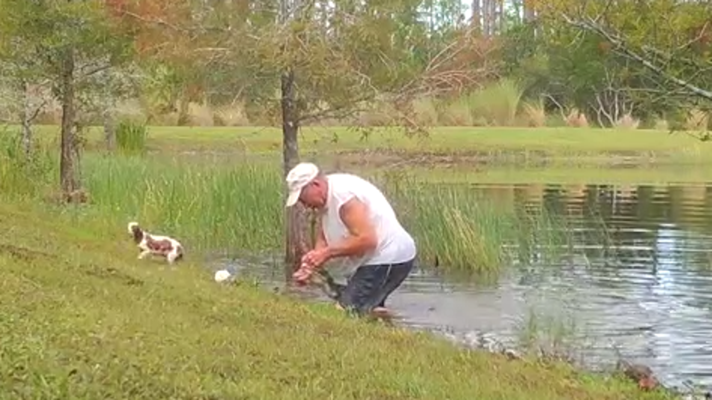 Florida man saves his dog from the jaws of an alligator; wildlife cam films the dramatic rescue