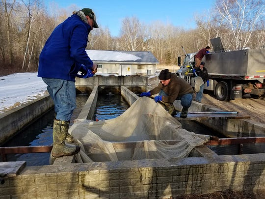 DNR crews prepare to net fish from a raceway in March 2018 at Kettle Moraine Springs State Fish Hatchery. The facility is being renovated with $26.6 million from the Knowles-Nelson Stewardship Program.
