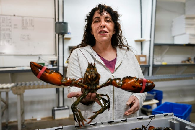 Stephanie Nadeau, owner of The Lobster Company, seen Wednesday, Nov. 18, 2020 at her shipping facility in Arundel, Maine. Nadeau said the lobster industry needs assurance that it'll be able to sell lobsters to other countries without punitive tariffs and is hopeful that assurance will arrive under Democratic President-elect Joe Biden.