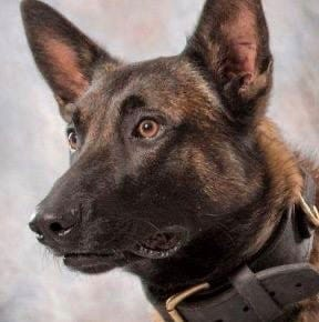"""K9 Officer Titan died """"honorably in the line of duty"""" on Nov. 22, according to Johnstown Police Department."""