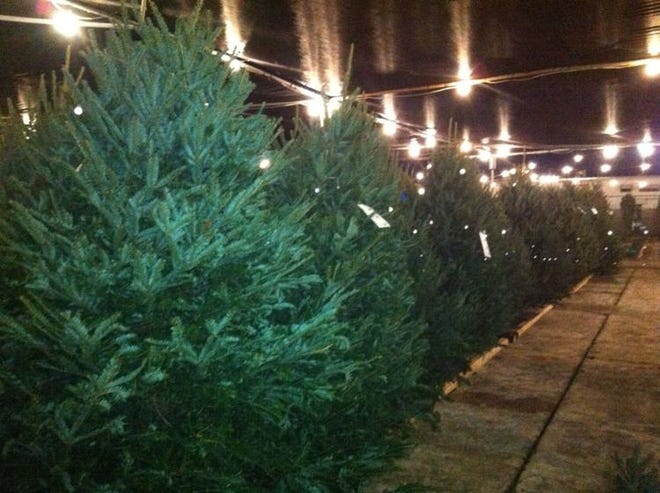 Louisiana Nursery sells up to 9,000 Christmas trees each holiday season. All are premium cut, with several top varieties available.