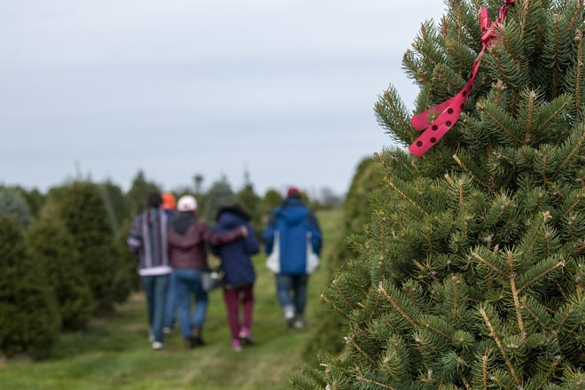 The Dugasz family walks back toward the barn after picking their Christmas tree at the Cackler Family Farms in Delaware, Ohio, on Nov. 14, 2020.
