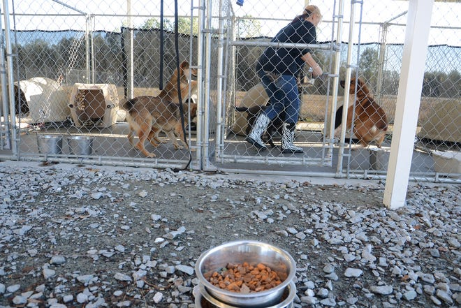 Lisa Burkett delivers food to dogs at the Lenoir County SPCA in this file photo.
