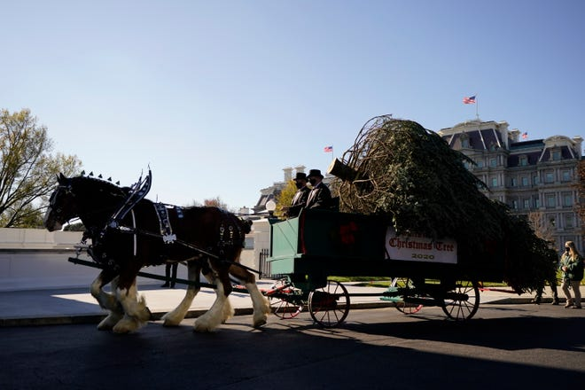 The 2020 Official White House Christmas tree is presented on the North Portico of the White House on Monday in Washington.