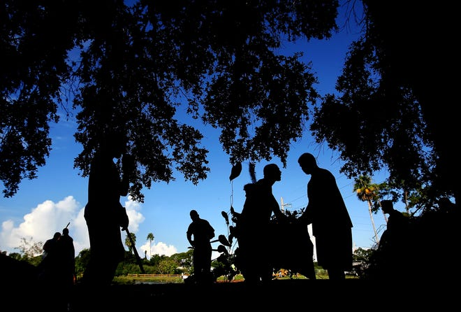 Members of the Booker High School football team remove invasive air potato vines from a tree during a neighborhood cleanup of the area surrounding Lime Lake in Sarasota in 2009. The city of Sarasota has received a grant that will enable staff to inventory trees throughout the city, identify diseased and dangerous trees for removal and plant new ones.