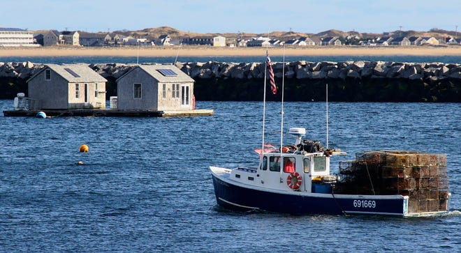 In 2019, and to a lesser extent this year, low-oxygen areas nicknamed 'the blob' killed hundreds of pounds of lobster catch in the bay. Fishermen are working with scientists to find out why. Pictured, Sea Level returns to Provincetown Harbor.