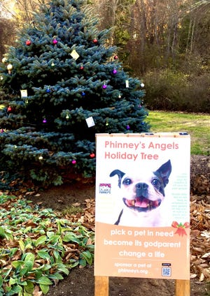 Phinney's has decorated an evergreen tree at Pierce Park.