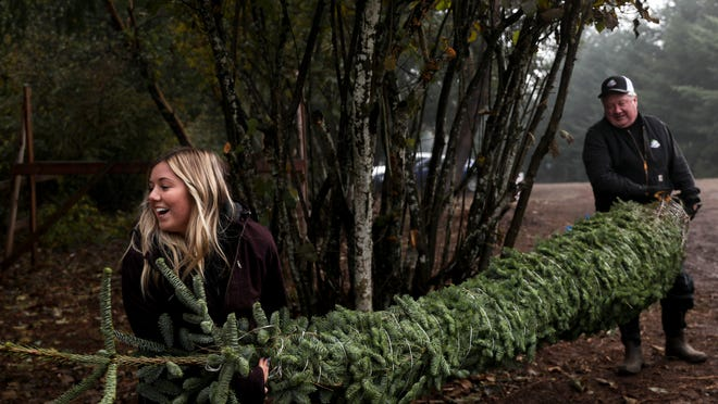 Christmas tree farms in Salem, Mid-Valley to find and cut your tree