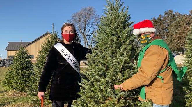 73rd Alice in Dairyland Julia Nunes cut down her first Christmas tree in 45 seconds at Evergreen Acres in East Troy.