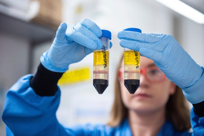 A researcher works in a laboratory on a coronavirus vaccine developed by AstraZeneca and Oxford University.