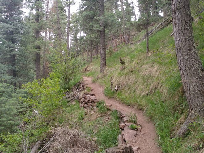 The forests of Pueblo Mountain Park offer a much-needed escape into the wild, which can help us connect with our inner gratitude.