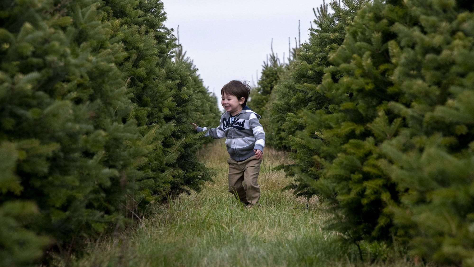 Central Ohio Christmas Tree Farms Expecting High Demand