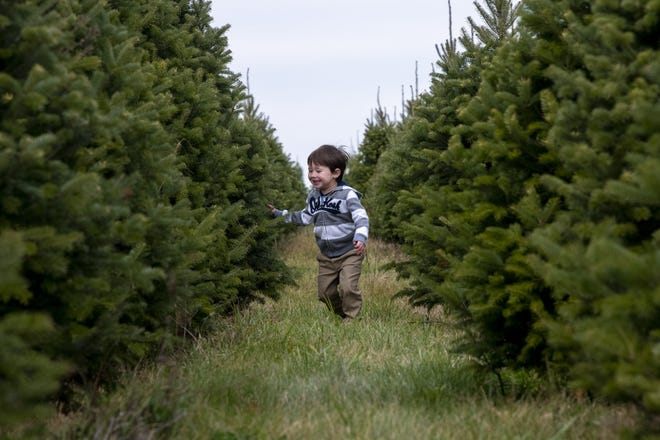 Tyler Tilgner, 3, of Grove City plays among the rows of pine trees Nov. 14 at Cackler Family Farms in Delaware.