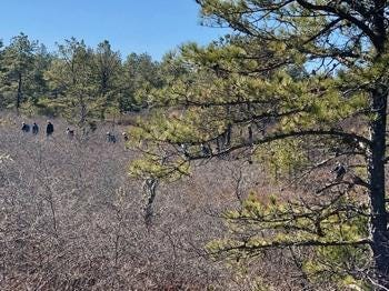 "Myles Standish State Forest is one of several Department of Conservation and Recreation parks hosting hikes on the day after Thanksgiving as part of its ""Go Green on Black Friday"" campaign."
