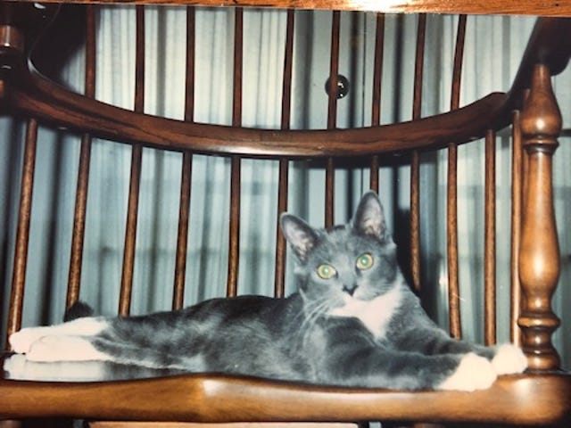Micky Golden Moore's beloved cat, Pablo, as a kitten at nearly five months old in February 1992.