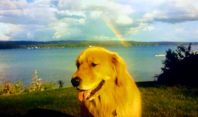 Karen Irwin's dog, Scout, at her cottage on Torch Lake in the summer of 2012 shortly before he died.