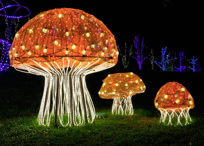 The beloved and popular Winter Lights holiday show at The North Carolina Arboretum is happening again this year, featuring towering toadstools and other nature-themed displays.