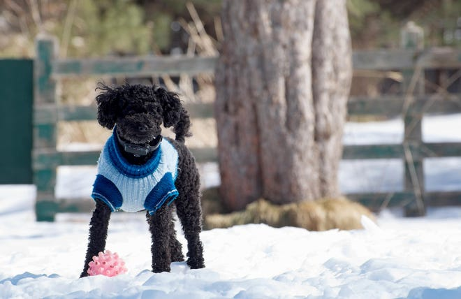 A sweater can help your dog weather cold temperatures.