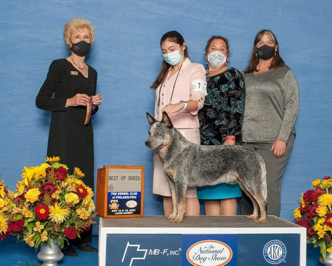 Crikey's win picture from the National Dog Show