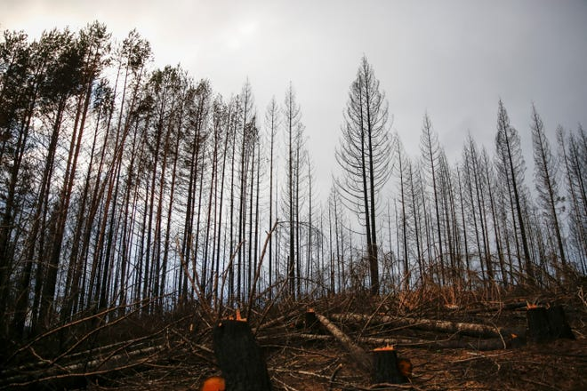 An area of heavily damaged forest outside Gates in November.