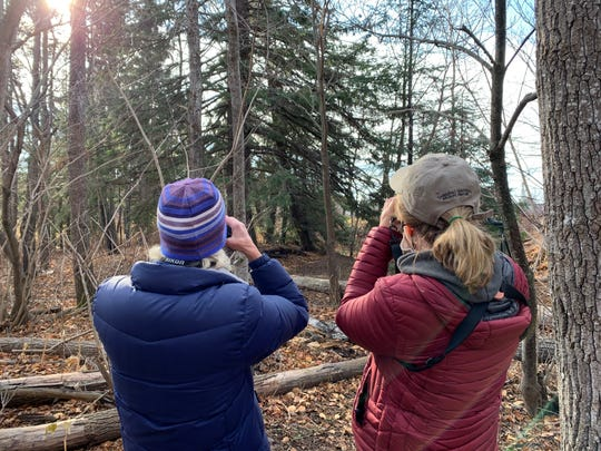 Birders take in the ruffed grouse hiding in the coniferous trees in a park in Grand Marais.