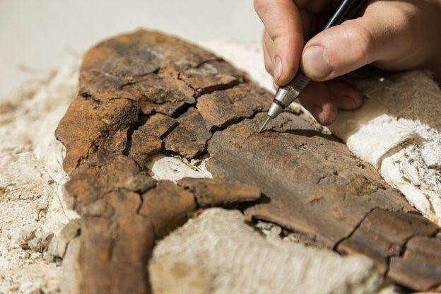 Mahasiswa Southern Utah University Jonathan Ginouves sedang mempersiapkan tulang rahang Tyrannosaurus di laboratorium kampus setelah menemukannya saat penggalian di Kanab.