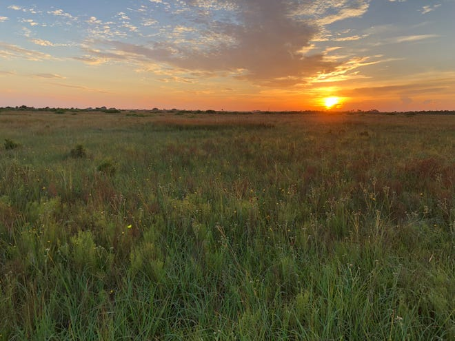 The DeLuca Destiny ranch land is a part of 27,000 acres donated to the University of Florida, with an easement to Ducks Unlimited, a major gift in the history of the state.