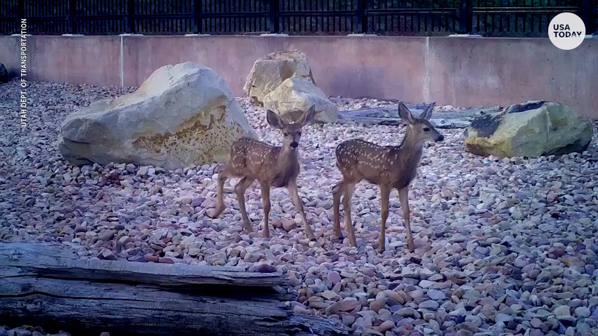 It s working!  Deer, bears and other critters like Utah s first wildlife bridge — and the state has video to prove it.