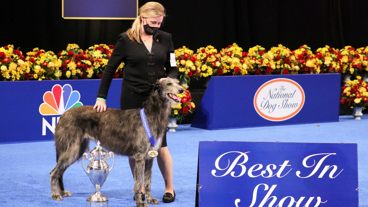 National Dog Show 2020: And the winner is ...