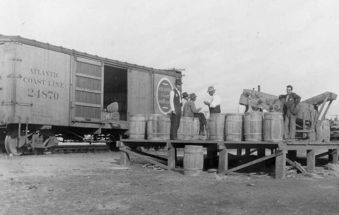 Irish potatoes grown in the western part of Flagler County were packed in barrels and shipped to Dupont on the Dupont Railway's narrow-gage flatcars, then transferred into standard-gage boxcars and shipped to northern markets. This photo was taken in the early 1900s.