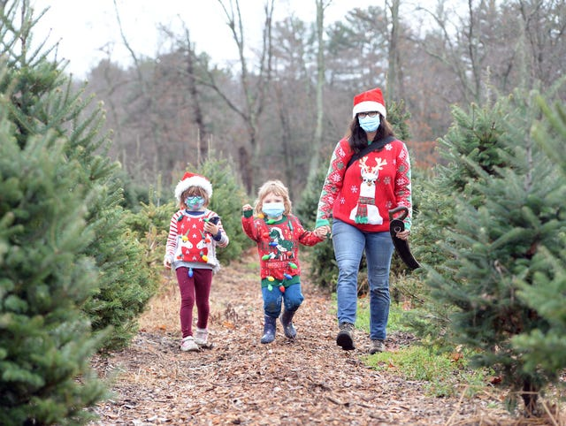 Opening Day At East Bridgewater S Mistletoe Acres Tree Farm Amid Covid