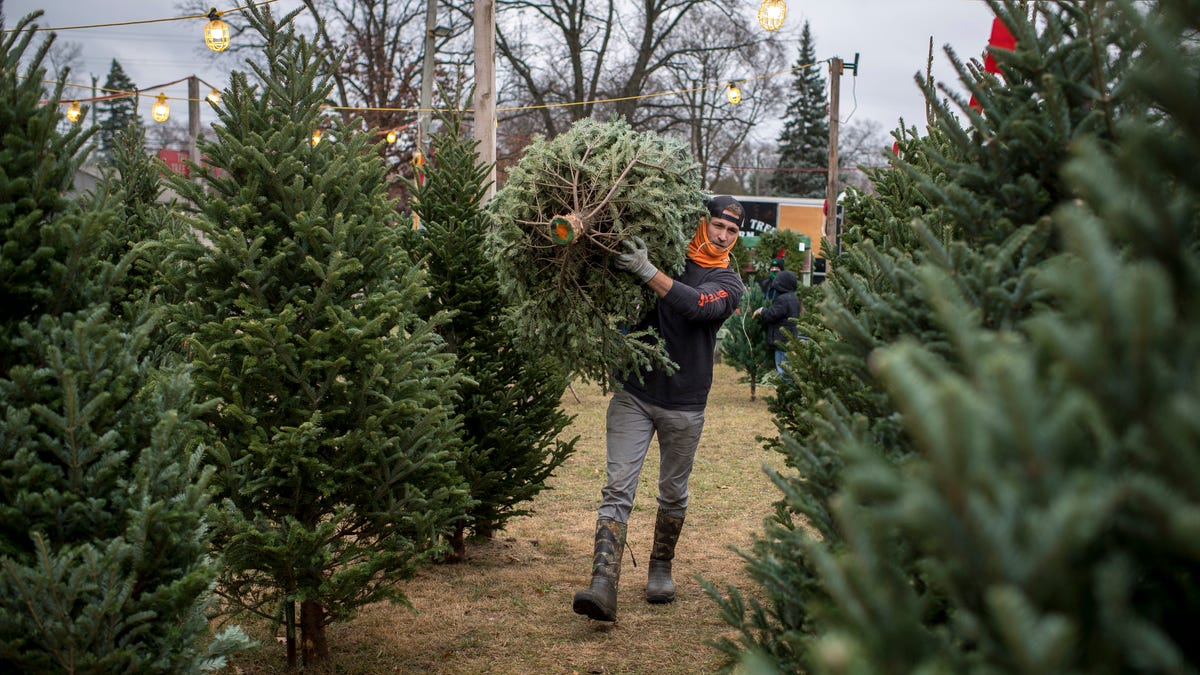 Michigan`s Christmas trees are selling like toilet paper...