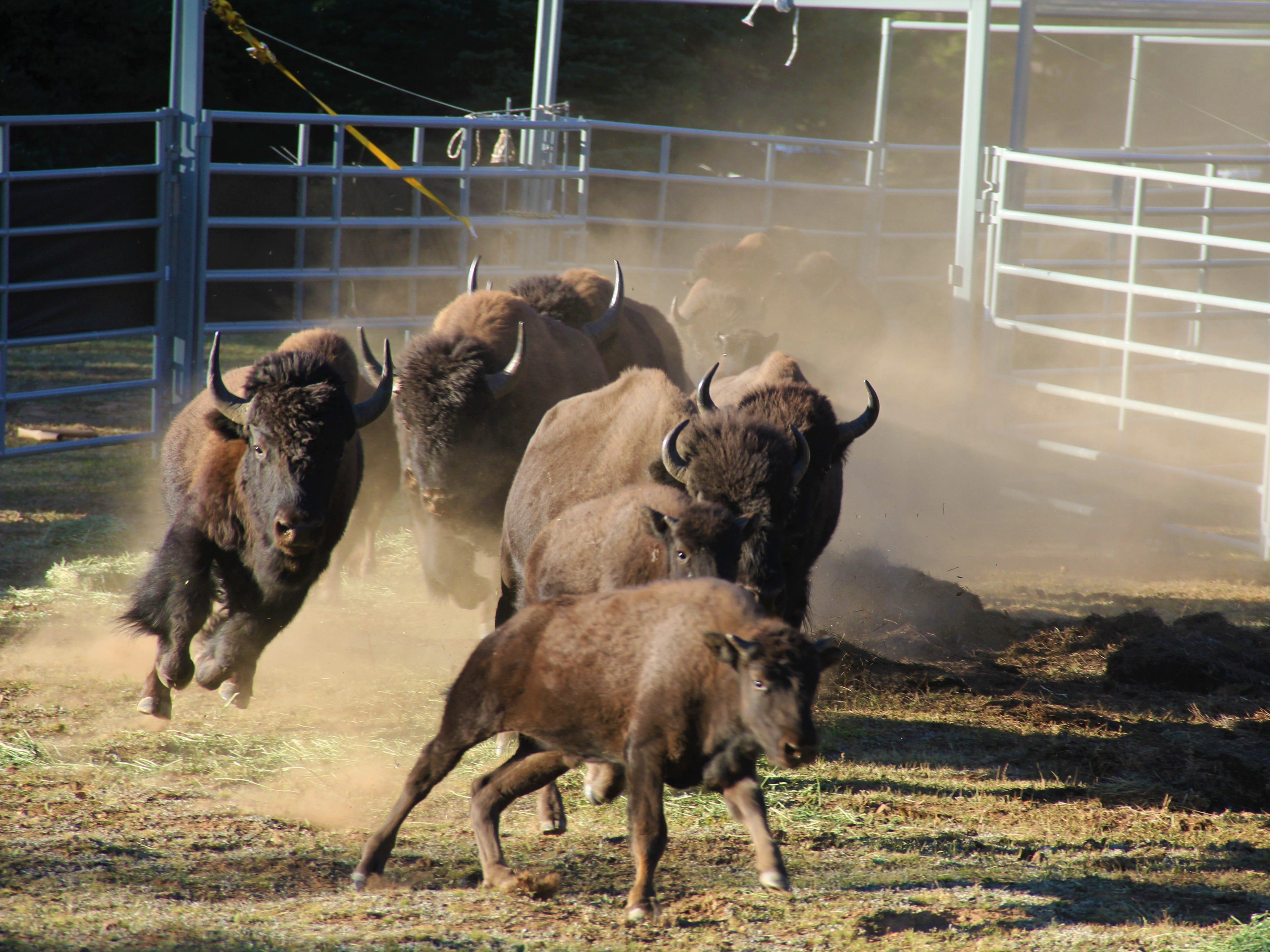 https://eu.azcentral.com/story/travel/arizona/grand-canyon/2021/04/28/grand-canyon-bison-hunt-signup-2021/4861633001/
