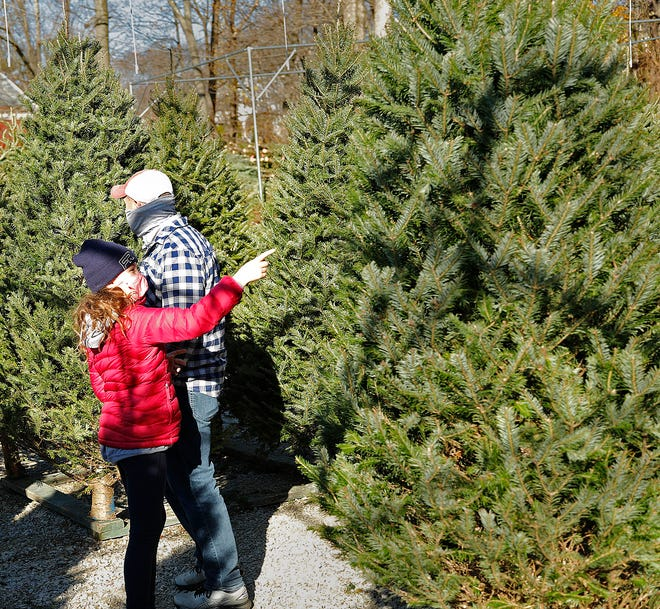 Caroline MacDonald-10 of Hingham points to a tree for dad Rick to look at.