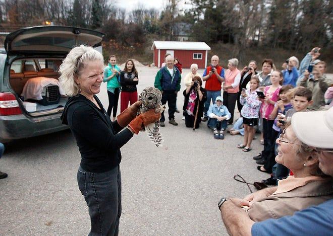 Rebecca Lessard, direktur eksekutif Wings of Wonder, menunjukkan burung hantu jantan yang dilarang sebelum melepaskannya ke alam liar pada 25 Oktober 2012, di belakang Akademi Sekolah Umum Leelanau Montessori di Suttons Bay.